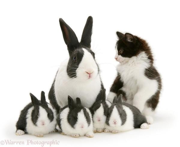 似てる!親が違うのにそっくりな動物画像30枚 (7)