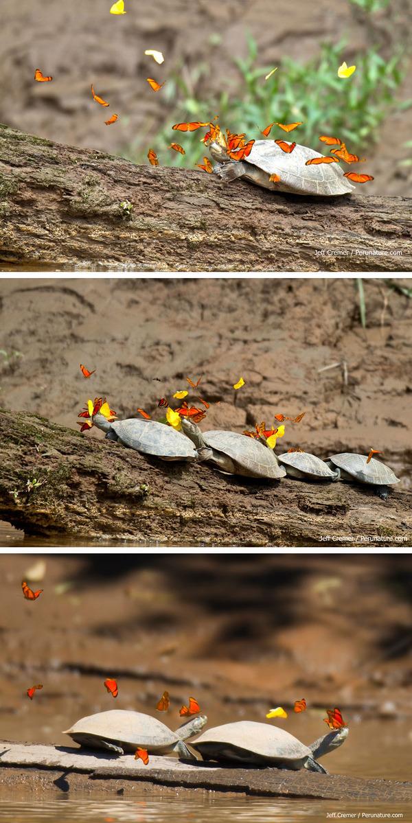 蝶と亀 1