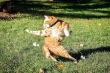 躍動感ある猫の写真で海外でコラ画像バトルが始まる!