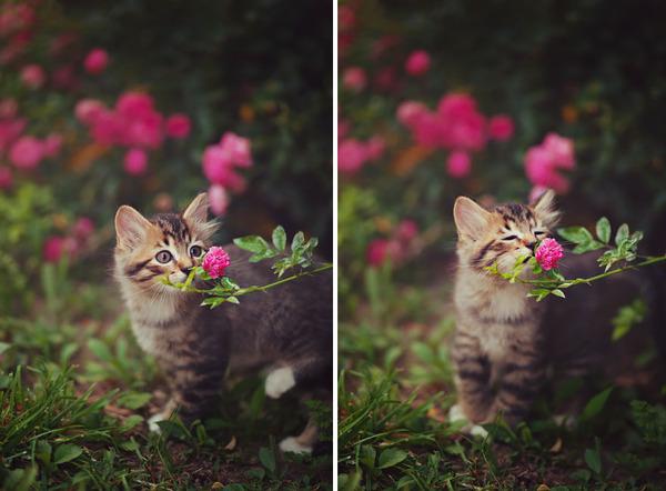 くんくん良い香り。花の匂いを嗅ぐ動物たちの画像 (39)