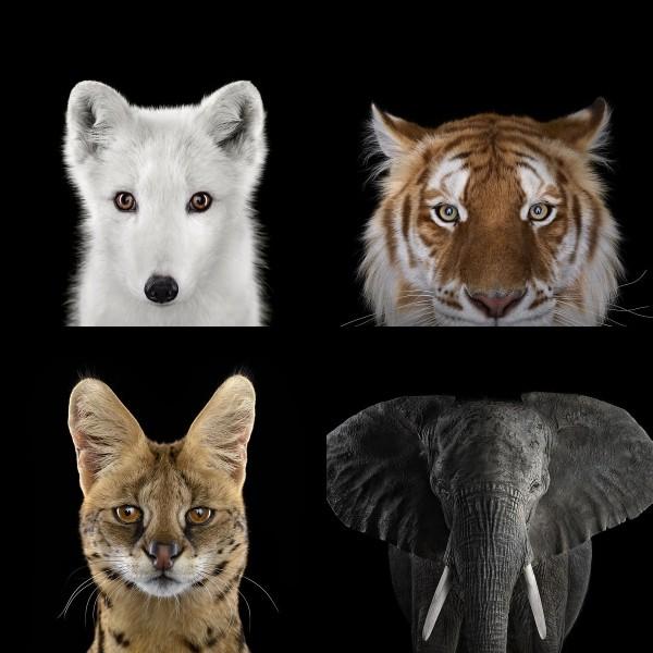 ワイルドライフ、動物達の肖像