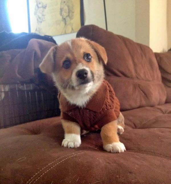 寒いからニットのセーターを小動物に着せてみた画像 (19)