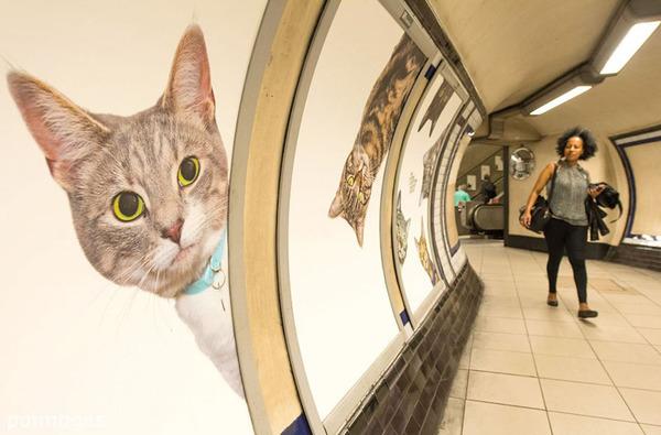 猫だらけ!猫の写真で満たされたロンドンの地下鉄 (5)