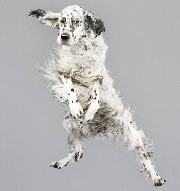 飛ぶ犬!空飛ぶわんこの絶妙な表情が逸品な写真 (9)