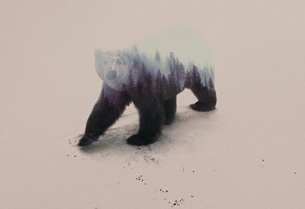 クマの二重露光写真byアンドレアス・リー 2