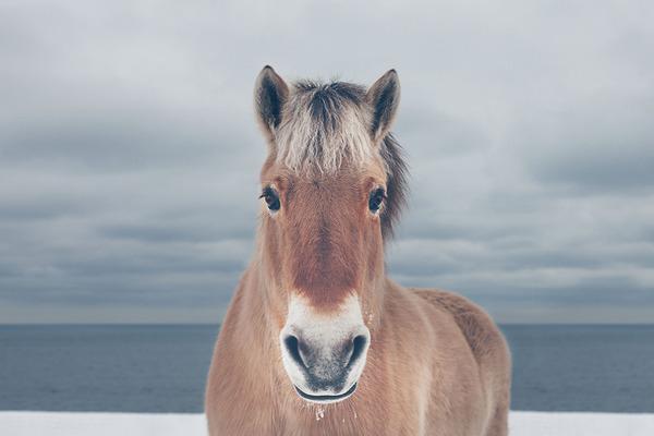 野生の馬の写真 (4)
