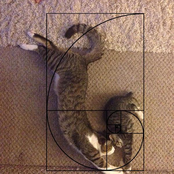 猫と黄金比の関係画像!猫の美しさの秘訣は黄金比にあり (19)