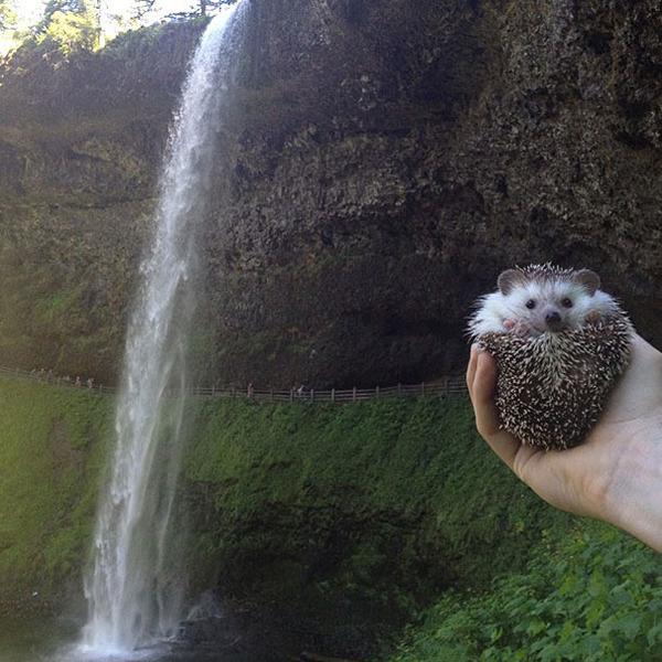 ハリネズミと滝