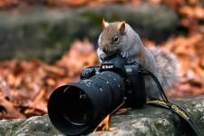 カメラマンになりたい!カメラに興味深々な動物の画像26枚