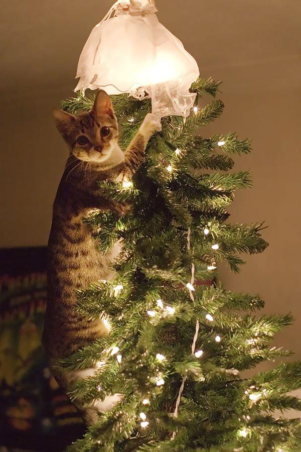 猫、あらぶる!クリスマスツリーに登る猫画像 (3)