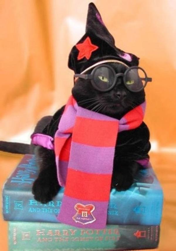 コスプレ猫!ハロウィンだし仮装した猫画像 (20)