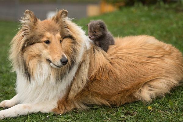 生後3週間の子狐Dinozzoは、お母さんを失った車の事故現場から救出された