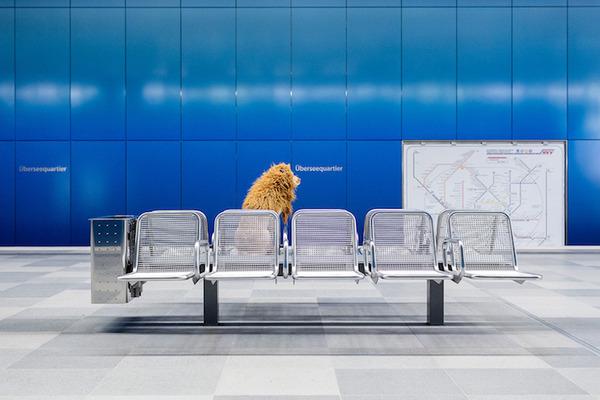 ライオン…の格好をしたわんこが街をさまよい歩く!【犬画像】 (14)