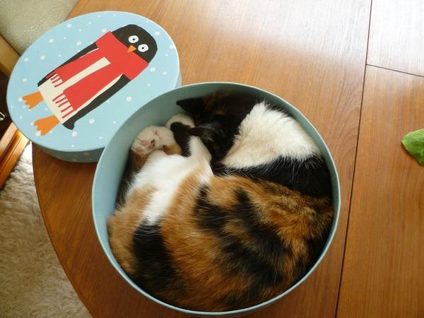 ジャストフィット猫 12