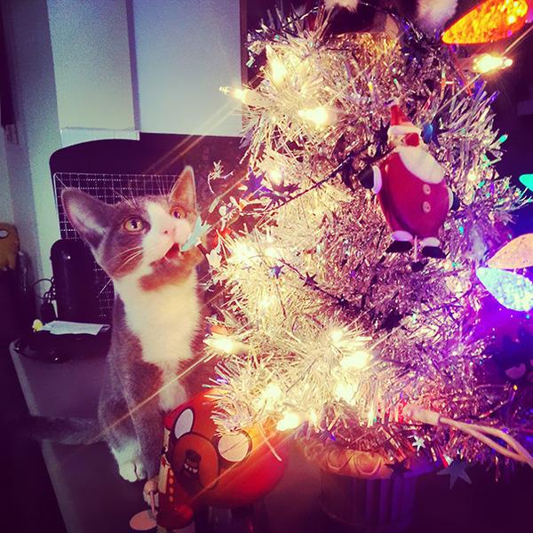 猫、あらぶる!クリスマスツリーに登る猫画像 (54)
