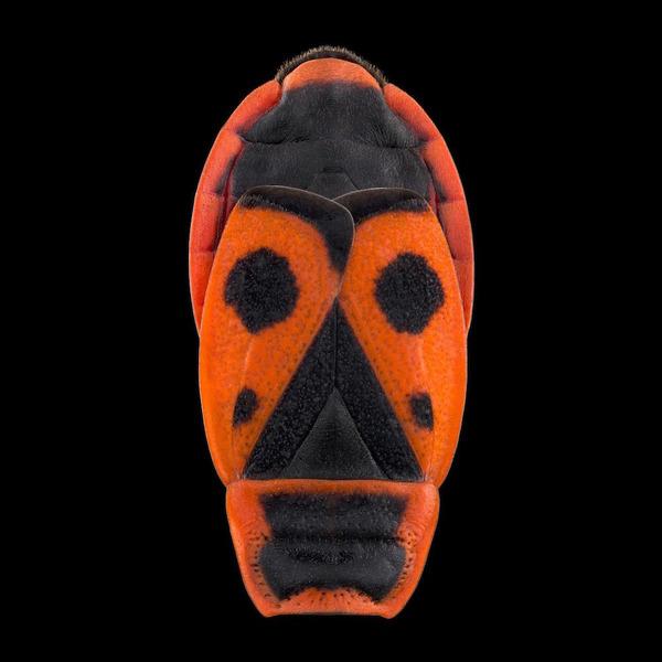 マクロ撮影された昆虫の外観がカラフル美しい (3)