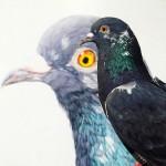 美しい鳩の油絵!壊れた卵から孵化して家族となった鳩