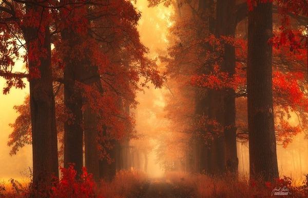 秋といえば紅葉や落葉の季節!美しすぎる秋の森の画像20枚 (19)