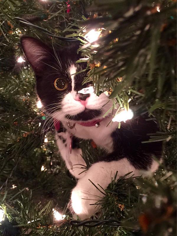 猫、あらぶる!クリスマスツリーに登る猫画像 (24)
