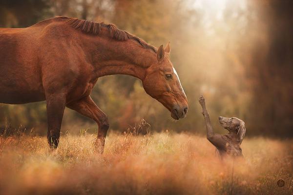 紅葉や秋の森の中を楽しむ動物たちの画像 (32)