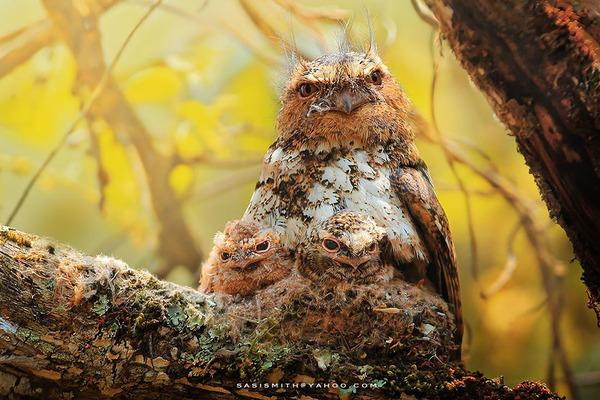可愛いフクロウの画像 11
