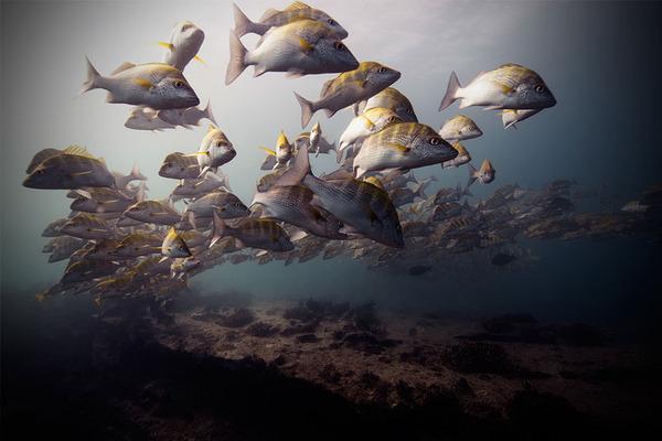 サカナの海中写真 Jorge Cervera Hauser 2