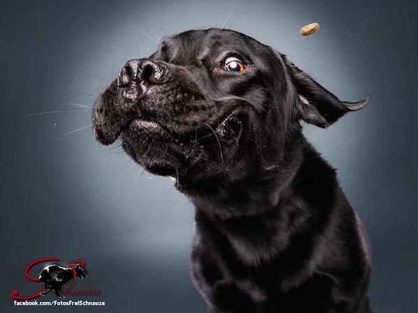 ハングリー精神!犬が獲物を食らう瞬間の静止画像がヤバイ (8)