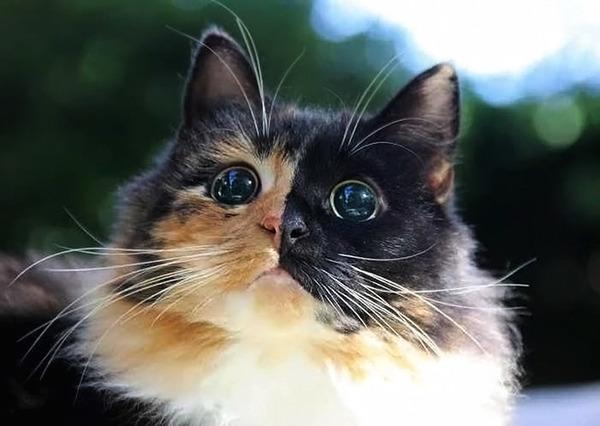 盲目の迷い猫。珍しい毛色のキメラネコが愛を知る (7)