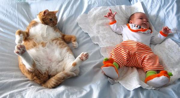 ペットは大切な家族!犬や猫と人間の子供の画像 (77)