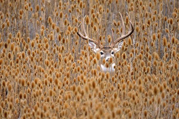 紅葉や秋の森の中を楽しむ動物たちの画像 (10)