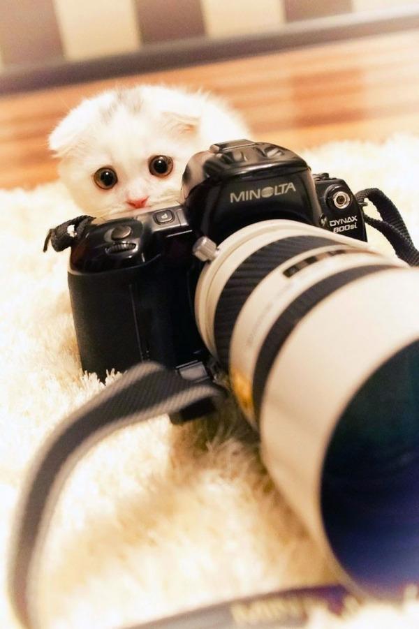 カメラに興味津々な動物の画像 (7)