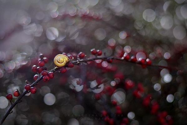 メルヘンチック!カタツムリの小さな世界を激写 (4)