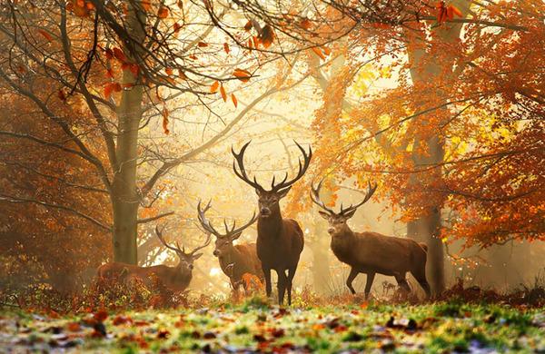 紅葉や秋の森の中を楽しむ動物たちの画像 (3)