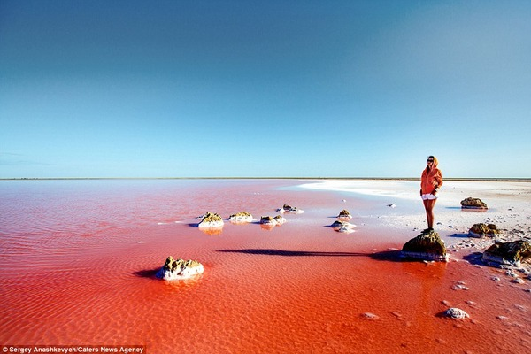 紅く染まる塩湖 Koyashskoye 4