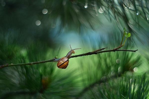 メルヘンチック!カタツムリの小さな世界を激写 (10)