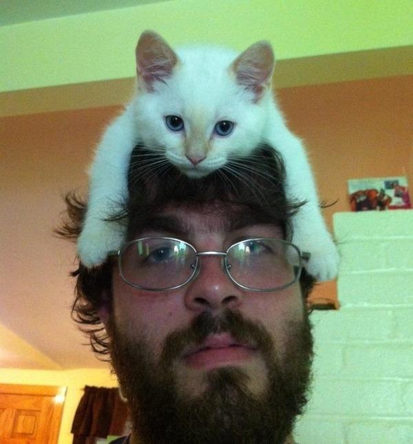 猫帽子 5