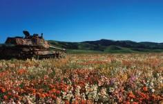 とってもラピュタ。自然の中で朽ち果てていく戦車の画像