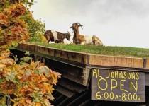 屋根の上にヤギが住む!スウェーデン料理のレストラン AL JOHNSON'S