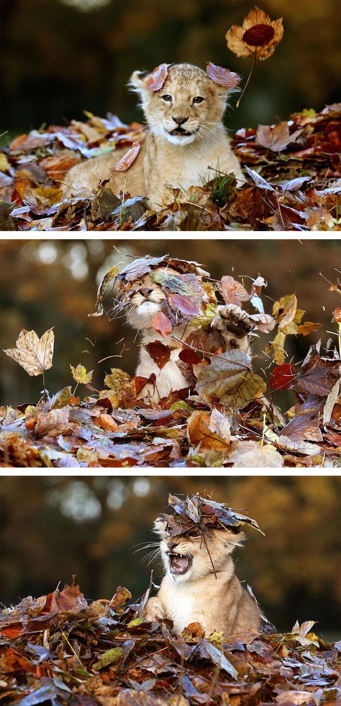 紅葉や秋の森の中を楽しむ動物たちの画像 (1)