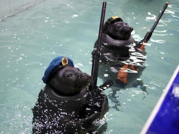 SEALS,ロシアのオットセイの軍事訓練、VEデー