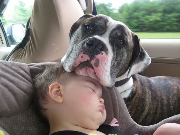 ペットは大切な家族!犬や猫と人間の子供の画像 (49)