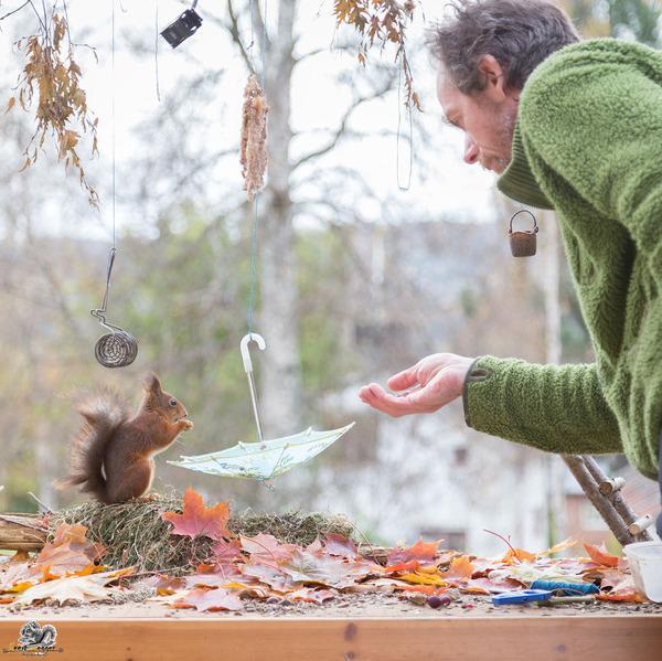 リスってファンタジー!家の裏庭に遊びに来る野生のリスの写真 (16)