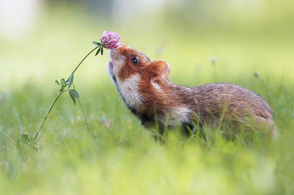 くんくん良い香り。花の匂いを嗅ぐ動物たちの画像 (12)