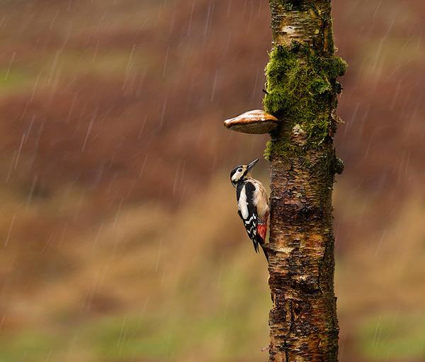自然の傘を差す動物 12