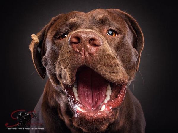 ハングリー精神!犬が獲物を食らう瞬間の静止画像がヤバイ (9)