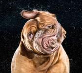 狂気の沙汰に満ちた犬の顔!高速度撮影による犬の顔がヤバイ