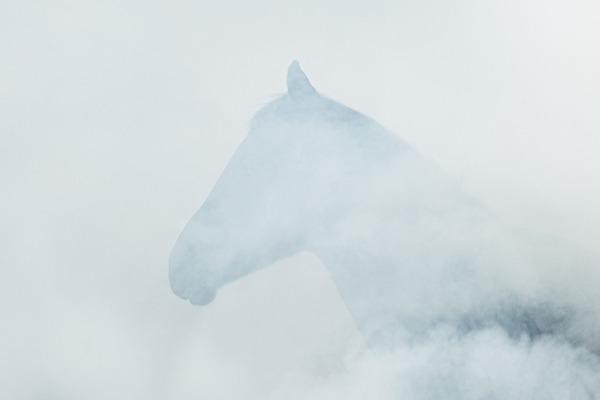 野生の馬の写真 (7)