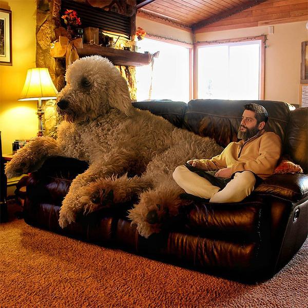犬を大きくする!そんな夢をフォトショップの画像加工 (5)
