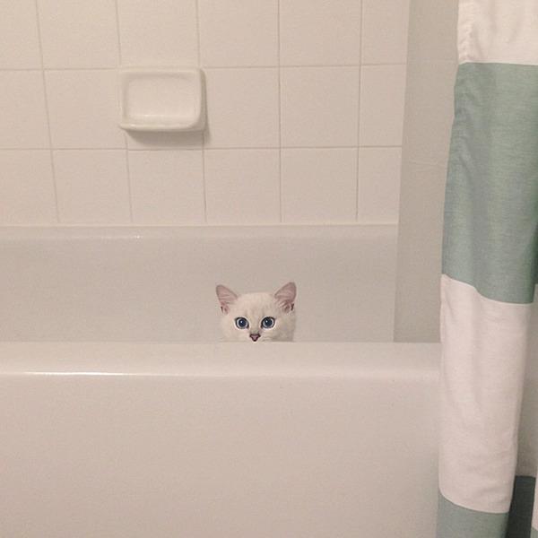 美しい…。綺麗な青い瞳をした白猫が話題!【猫画像】 (11)
