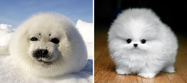 アザラシって犬そっくりじゃね?犬とアザラシを比較画像! (30)